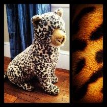 Pretty Cheetah