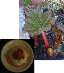 rhubarb,rhubarb