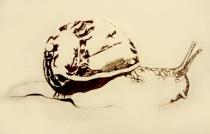 snailwip1