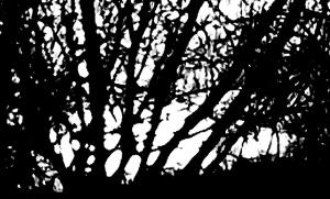 treesbnl